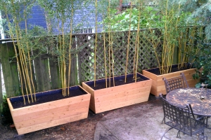 Bamboo Rescue An All In One Bamboo Service Based In